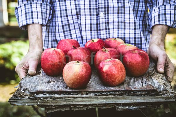 農家 リンゴ オーガニック フルーツ 農民 手 ストックフォト © mythja
