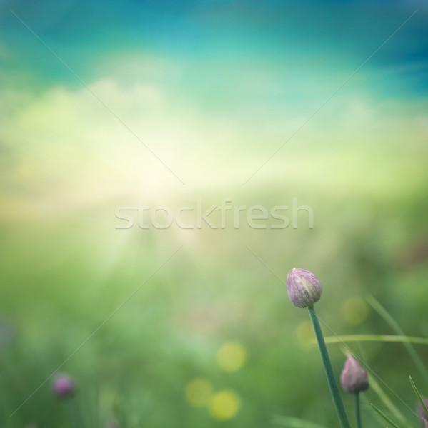 Cebolinha fresco flor colorido primavera páscoa Foto stock © mythja
