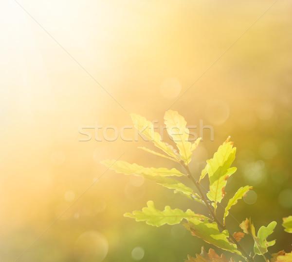 Automne feuille matin couleurs espace de copie résumé Photo stock © mythja