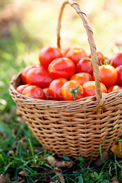 Pomodori basket estate erba Foto d'archivio © mythja