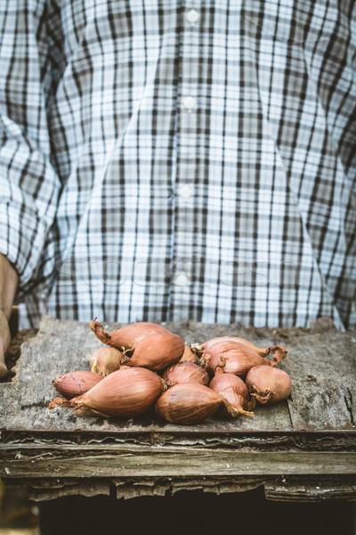農家 玉葱 オーガニック 野菜 農民 手 ストックフォト © mythja