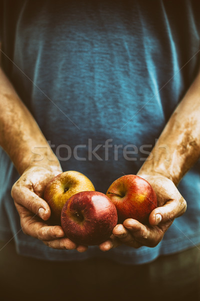 Farmer with apples Stock photo © mythja