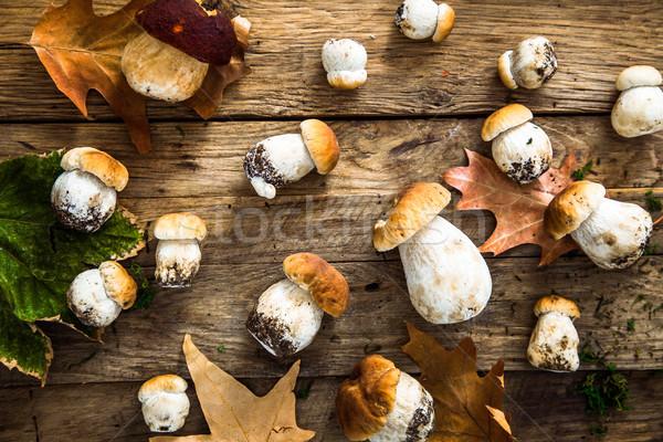 Mushrooms on wood. Autumn Fruit Stock photo © mythja