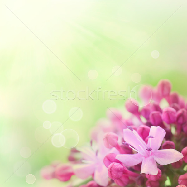 Beautiful abstract floral background Stock photo © mythja