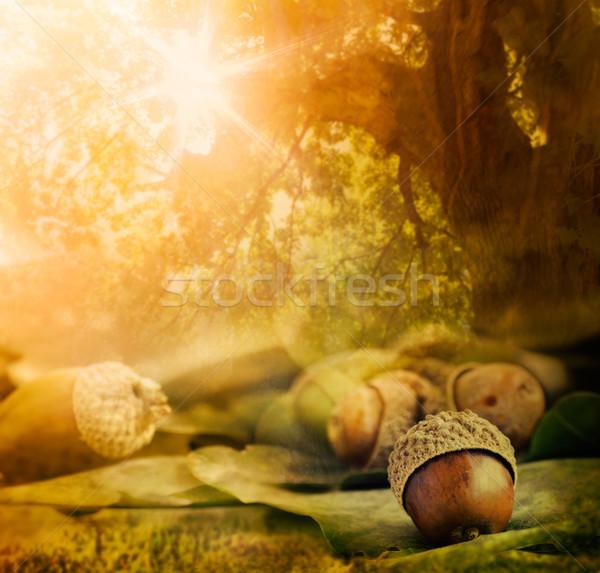Zdjęcia stock: Jesienią · projektu · granicy · dąb · bokeh · światła