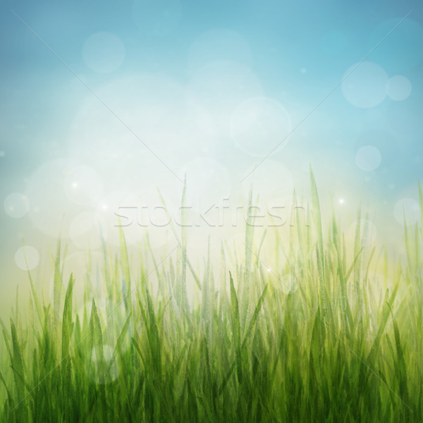 Stock photo: Spring or summer abstract season nature background