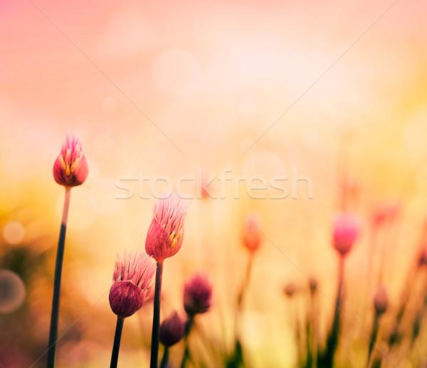 Bieslook bloemen vers bloem kleurrijk voorjaar Stockfoto © mythja