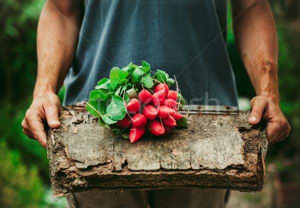 Farmer with vegetables Stock photo © mythja