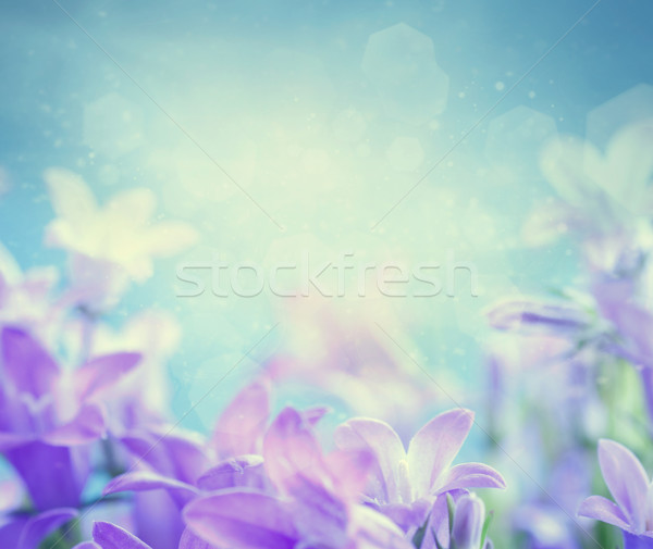 Campanula floral background Stock photo © mythja