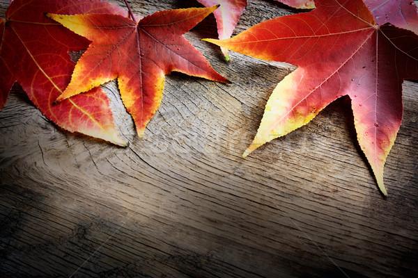 Stock foto: Herbst · Blatt · fallen · rot · Blätter · Baum