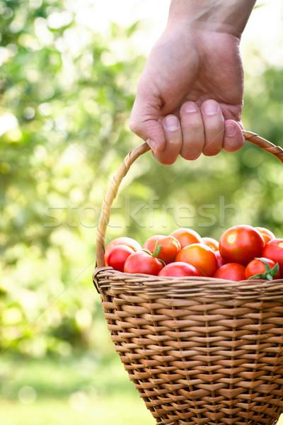 Agricoltore pomodori basket vegetali giardino Foto d'archivio © mythja
