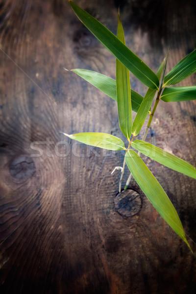 Bambù foglia natura legno muro abstract Foto d'archivio © mythja