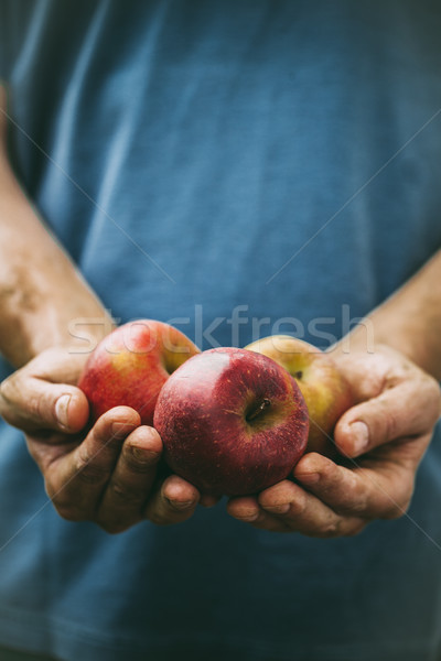 Agricultor manzanas orgánico frutas hortalizas Foto stock © mythja