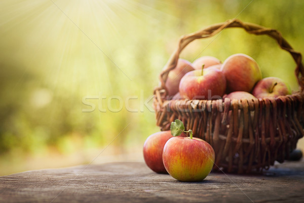 Stok fotoğraf: Taze · üzüm · taze · hasat · elma · doğa