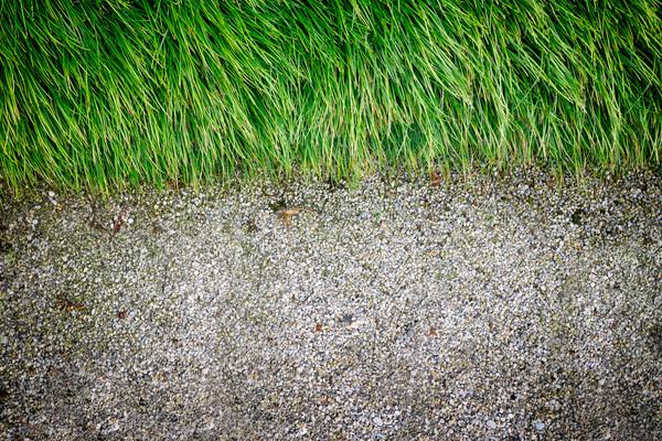 Spring grass Stock photo © mythja
