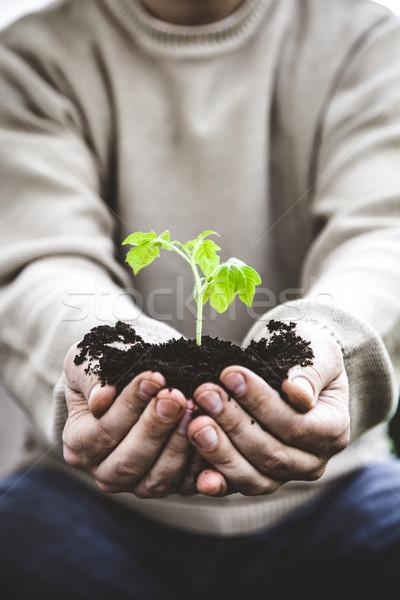 Kert palánta gazdák kezek kertész zöldség Stock fotó © mythja