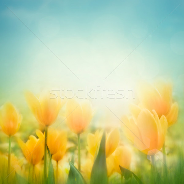 Spring Easter background  Stock photo © mythja