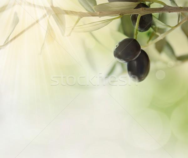 Olives design background Stock photo © mythja