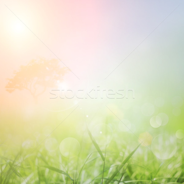 Spring or summer nature sunset background Stock photo © mythja