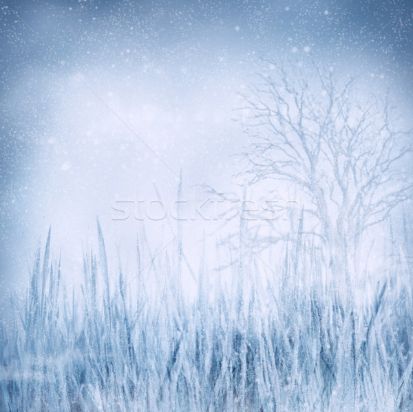 Winter frozen landscape Stock photo © mythja