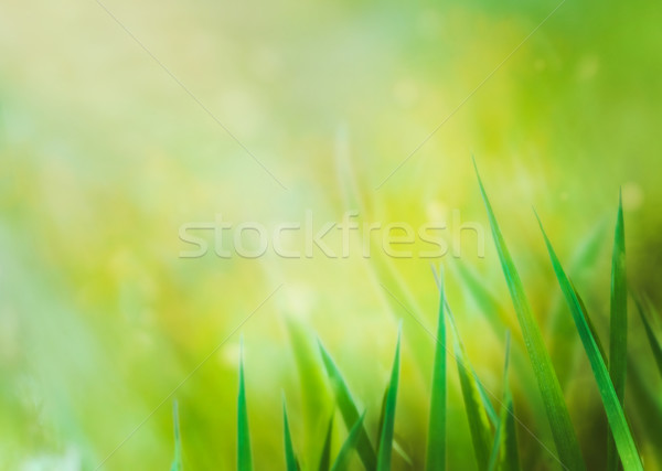 Hierba primavera naturaleza paisaje diseno fondo Foto stock © mythja