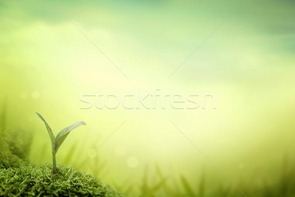 Palánta növény kert kicsi tavasz fény Stock fotó © mythja