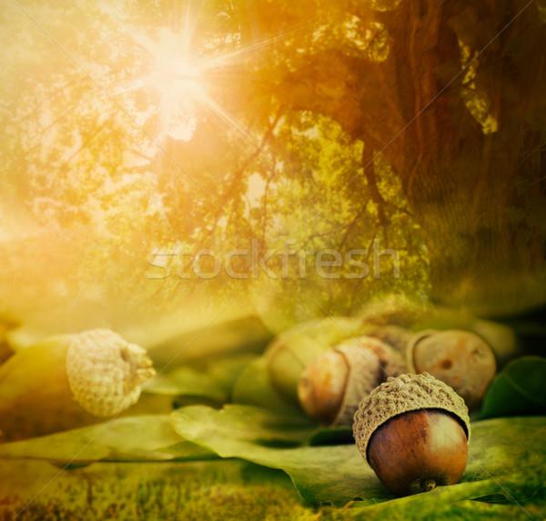 Foto stock: Outono · projeto · fronteira · carvalho · bokeh · luzes