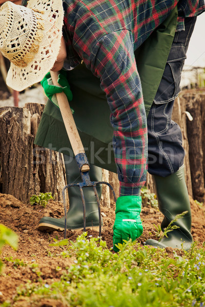 Spring garden concept. Stock photo © mythja