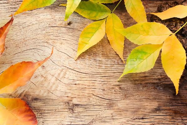Foto stock: Outono · floresta · árvore · casca · colorido · folhas