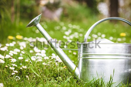 Spring garden Stock photo © mythja