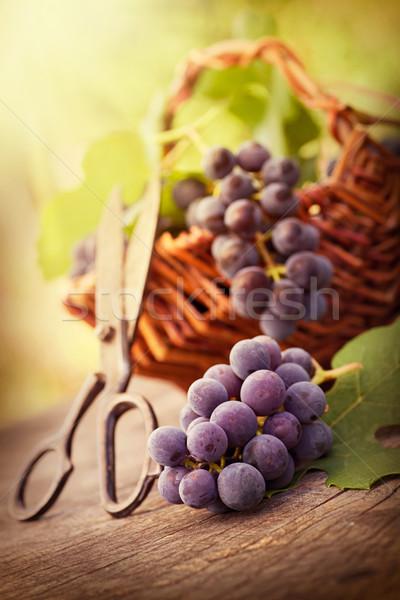 виноград свежие урожай виноградник черный Сток-фото © mythja