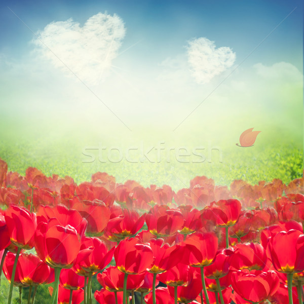 Stock photo: Tulip field with heart clouds