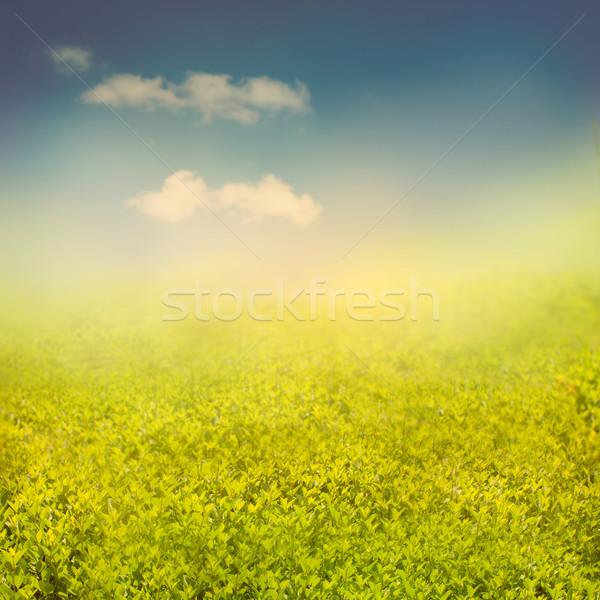Summer or spring background Stock photo © mythja