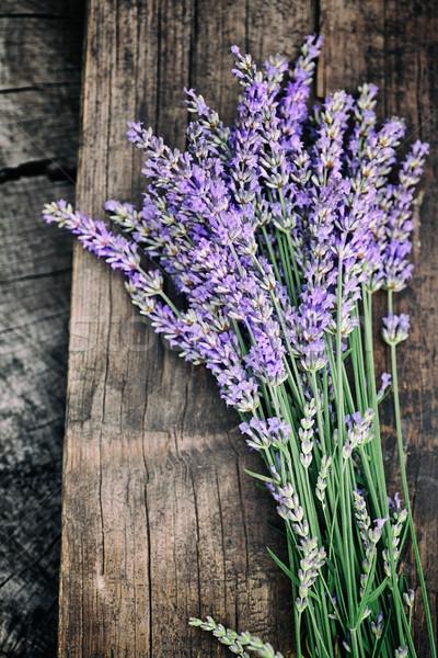 Fresco lavanda verão floral flores Foto stock © mythja