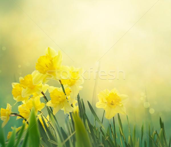 Nárcisz tavasz virágmintás húsvét tavaszi virágok elegáns Stock fotó © mythja