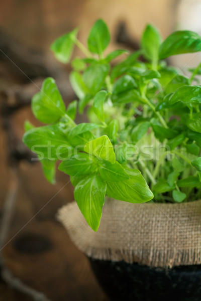 Fresh basil  Stock photo © mythja