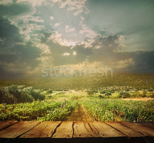 Vineyard background Stock photo © mythja