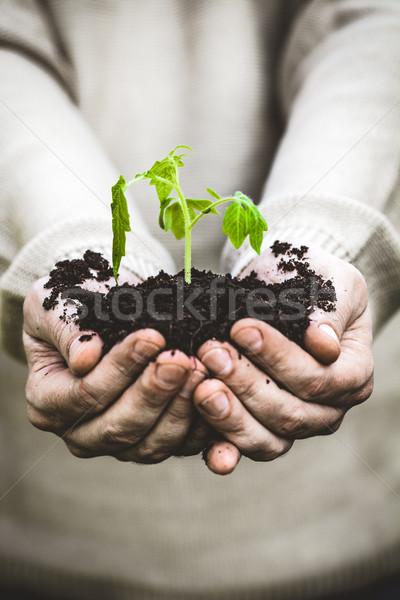 Bahçe fide çiftçiler eller bahçıvan sebze Stok fotoğraf © mythja