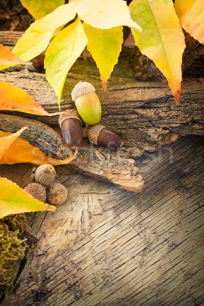 Stock foto: Herbst · Wald · Baum · Rinde · farbenreich · Blätter