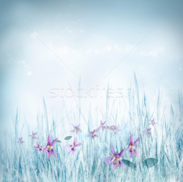 Spring floral background with violet flowers Stock photo © mythja