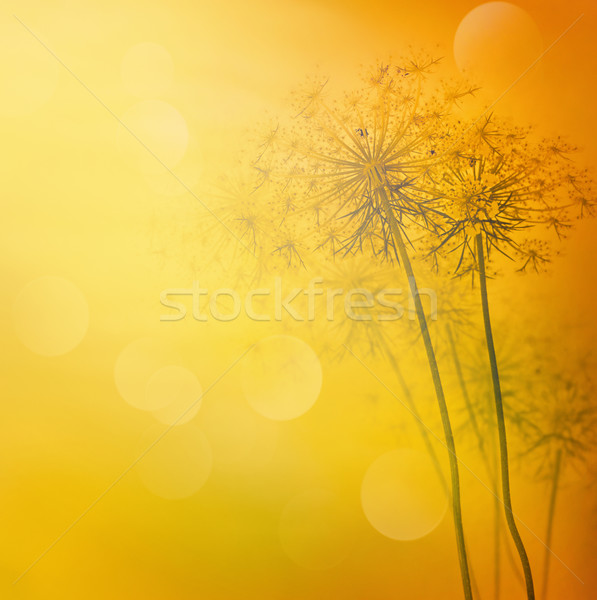 floral abstract background Stock photo © mythja