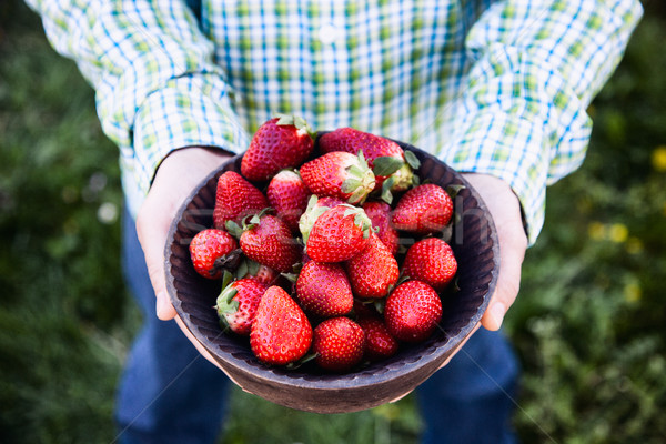 Fresh strawberries in farmer's hands Stock photo © mythja