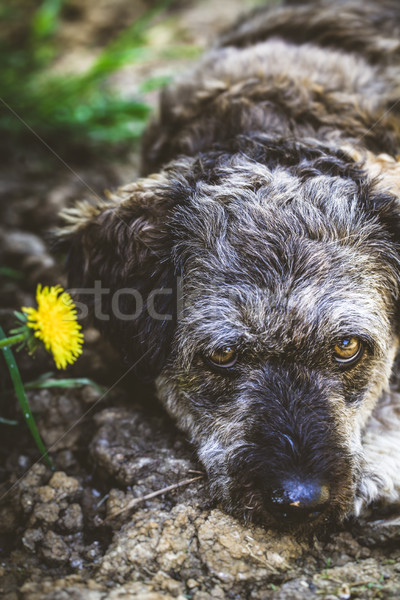 Small dog in garden Stock photo © mythja