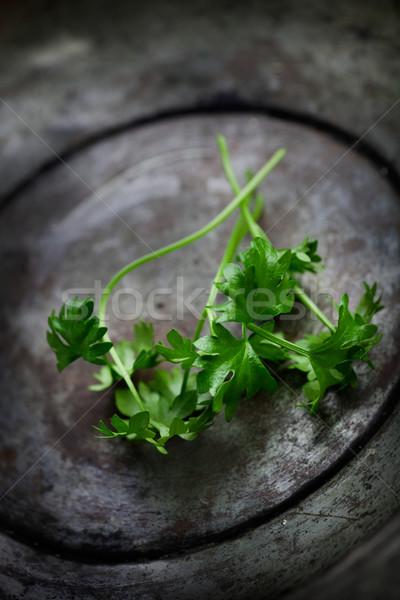 Frescos apio hierbas hojas alimentos fondo Foto stock © mythja