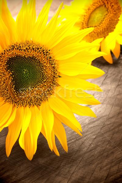 подсолнечника лепестков подсолнухи небе цветок Сток-фото © mythja
