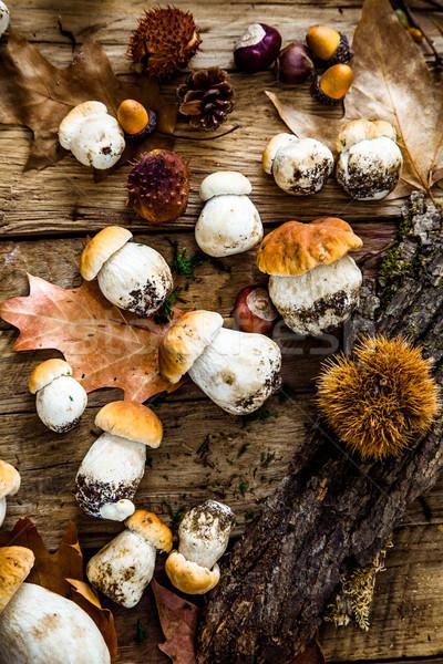 Cogumelos madeira cogumelo outono floresta Foto stock © mythja