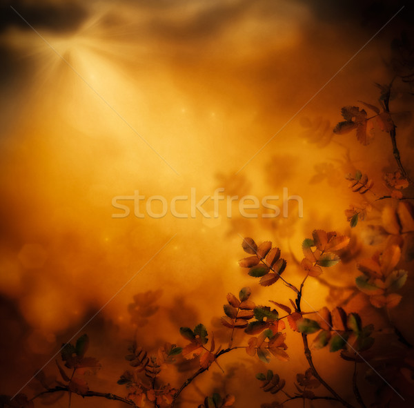 Autumn design - Forest in fall Stock photo © mythja