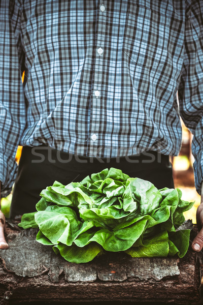Farmer with lettuce Stock photo © mythja