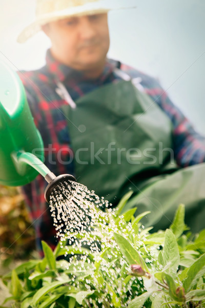 Spring garden concept. Stock photo © mythja