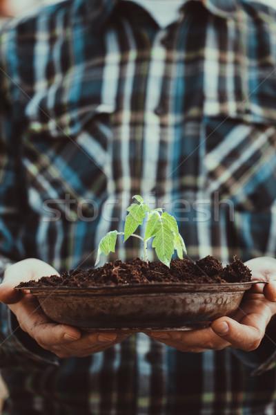 Garden seedling in farmer's hands Stock photo © mythja